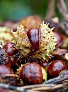 Chestnuts Autumn Blog