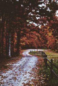 Long Walks Autumn blog